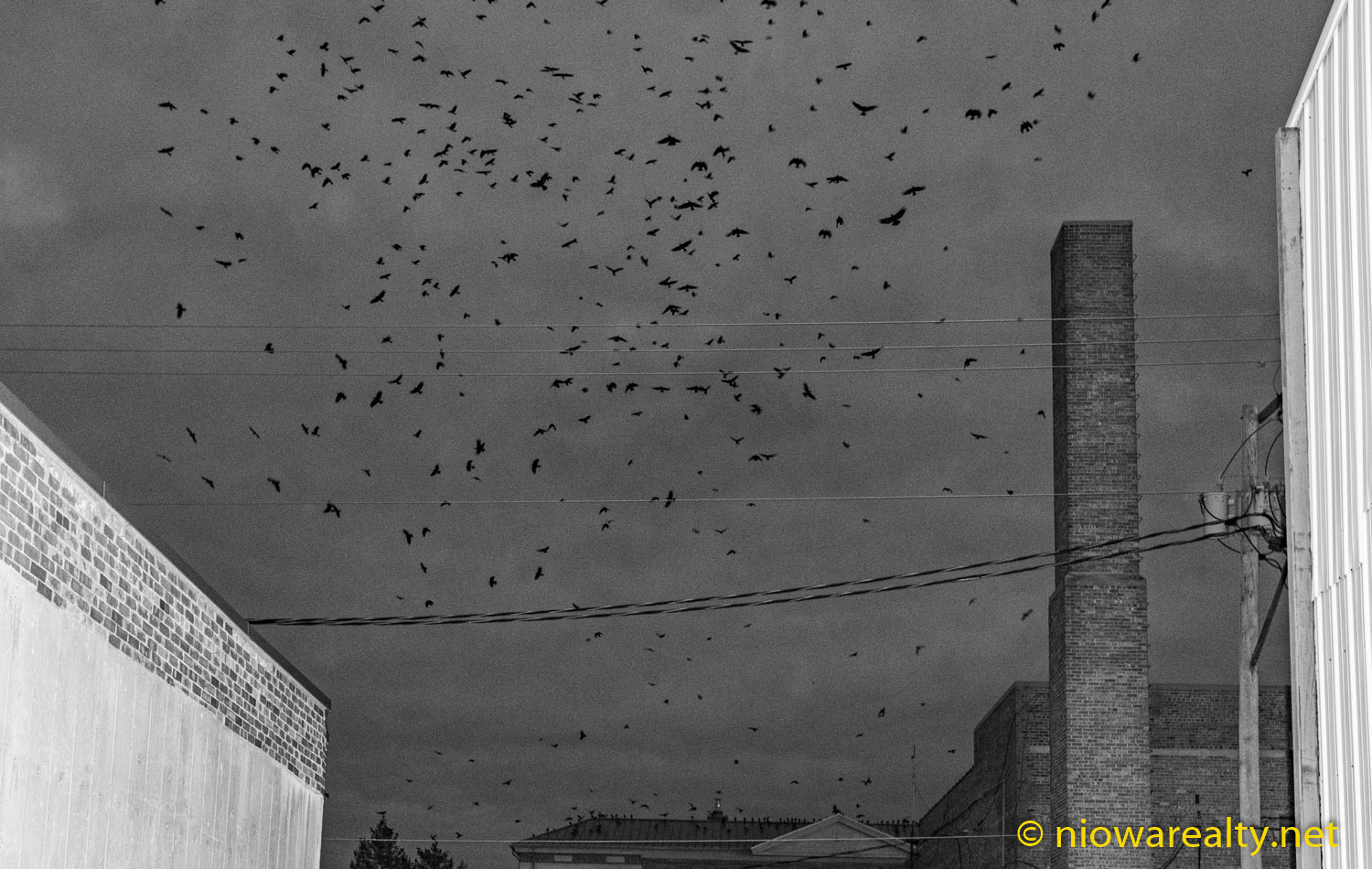 The Return of the Crows