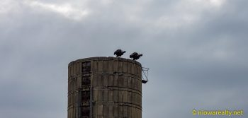 Vultures Perched Above