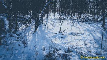 A Wildlife Trail