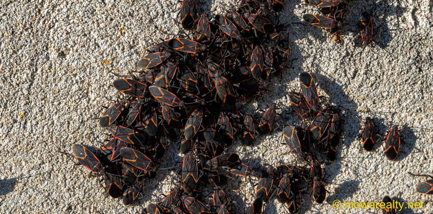 Good-souled Bugs