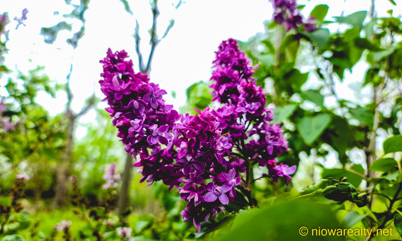 When Lilacs Last