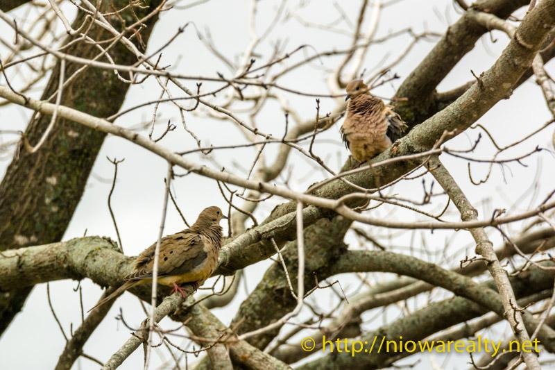 Morning-Doves