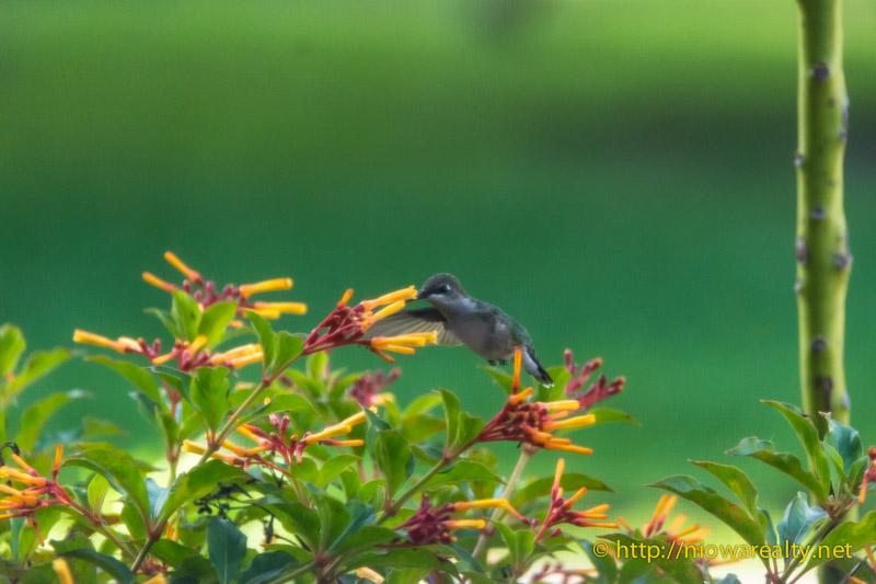 Flutterings