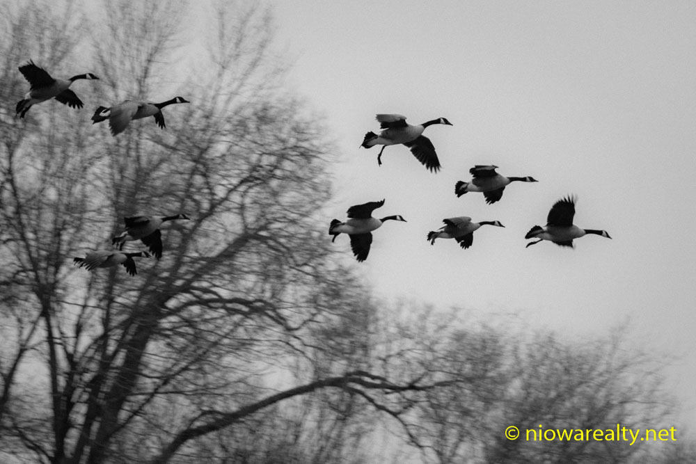 A Skein of Geese