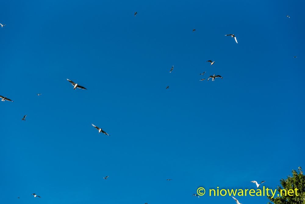 The Birds-1