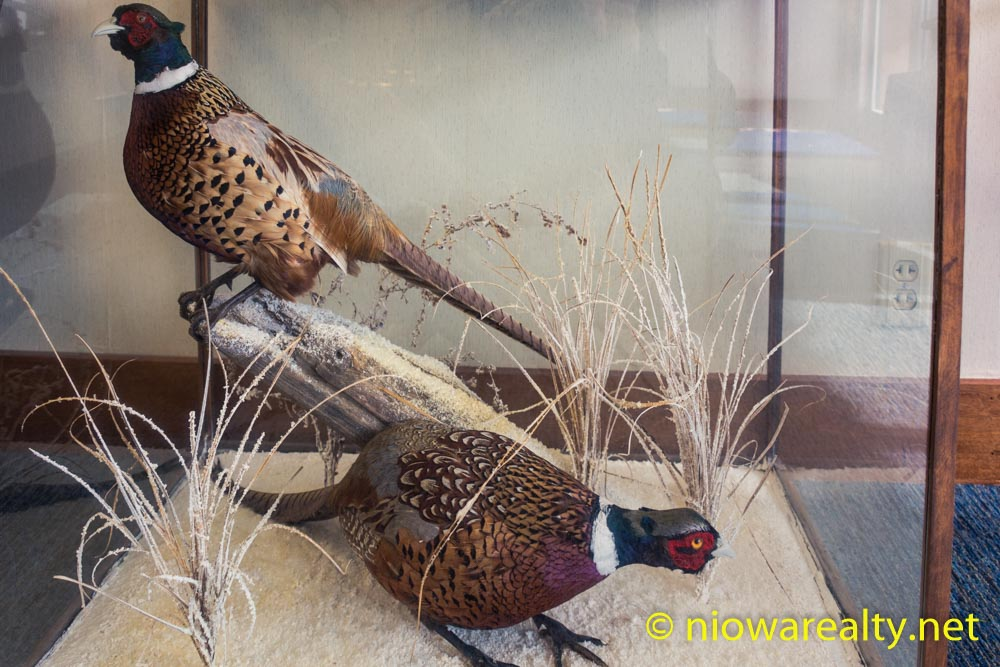 Pheasants under Glass